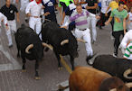 Emparejamiento de toros.