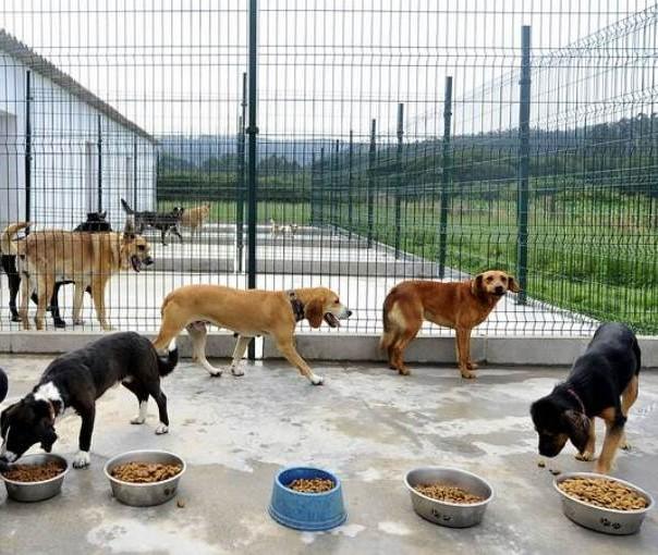FICHA TÉCNICA CENTROS DE ANIMALES DE COMPAÑÍA
