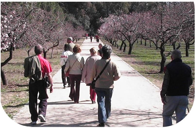 Se ve a un grupo de mayores  marchando por un camino