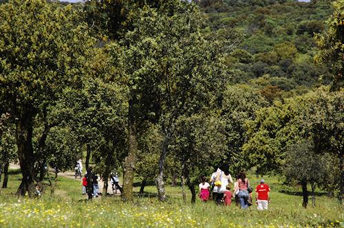 jornada-botanica-monografica-en-el-centro-de-naturaleza-dehesa-boyal-para-conocer-sus-variedades