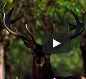 Sanse conmemora el Día Mundial de los Bosques, con la proyección de un documental sobre los bosques de Madrid
