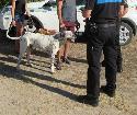 El Ayuntamiento, a través de la Policía Local, inicia una campaña de control de perros