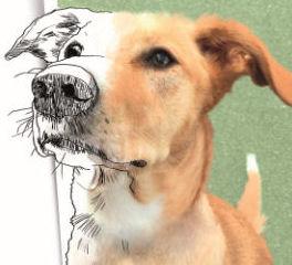 Sanse pone en marcha su Observatorio Municipal de Protección Animal